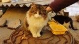 Котопункт для котоморд: как сделать в городе доступную среду для животных