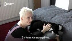 Австрийцы спасают бездомных животных из других стран