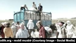 Сбор хлопка в Узбекистане, 2017 год
