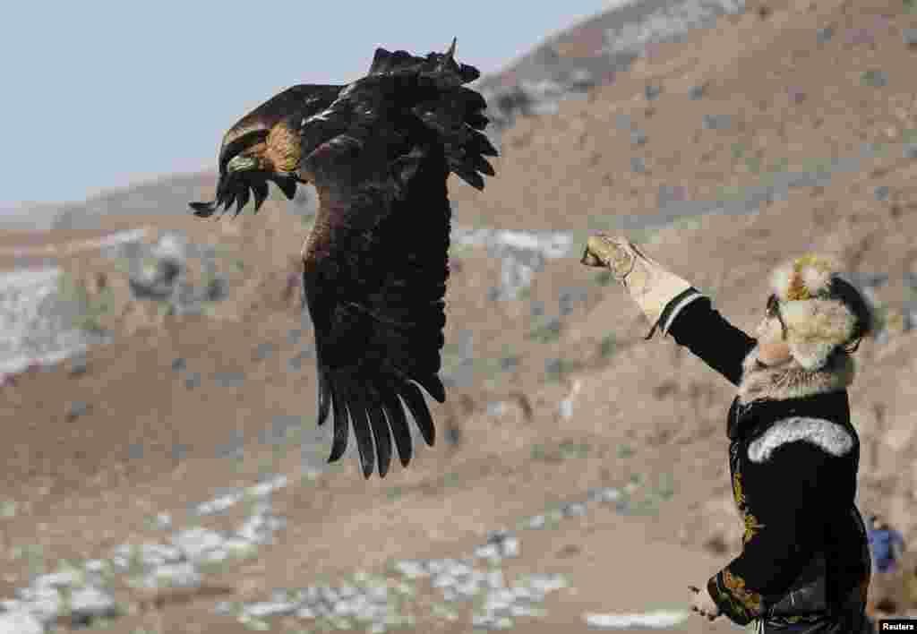 Охоту с ловчими птицами практикуют киргизы, моголы и некоторые другие народы Центральной Азии