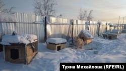 Собачий приют в Якутске