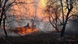 Главное: 20 тысяч больных коронавирусом в России и пожар в Чернобыле