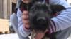 Почему собакам в латвийских приютах никогда не дают имена