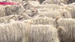 В Таджикистане начался сезон стрижки коз