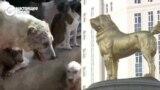Собаки в Туркменистане: одним ставят памятники, других жестоко отлавливают
