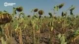 Пятое время года: катастрофа молдавских фермеров