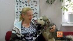 Донецкие приюты ищут хозяев собакам из зоны АТО