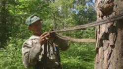 Неизвестная Россия: как в Башкирии добывают дикий мед