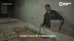 Белорусский предприниматель выращивает сверчков на протеиновые батончики