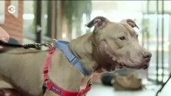 Сенат США принял закон против жестокого обращения с животными
