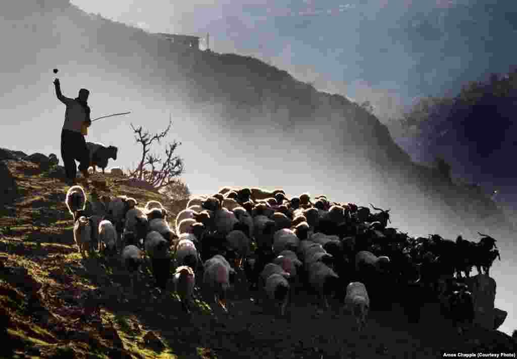 Пастух на ирано-иракской границе