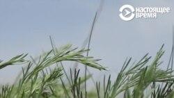Забайкальский чабан — о своей жизни и земле