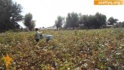Казахские дети вынуждены работать на уборке хлопка