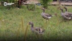 Штраф за сад: фермер купил болото, которое на бумагах было пашней