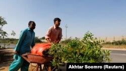 Рабочие высаживают деревья в Карачи