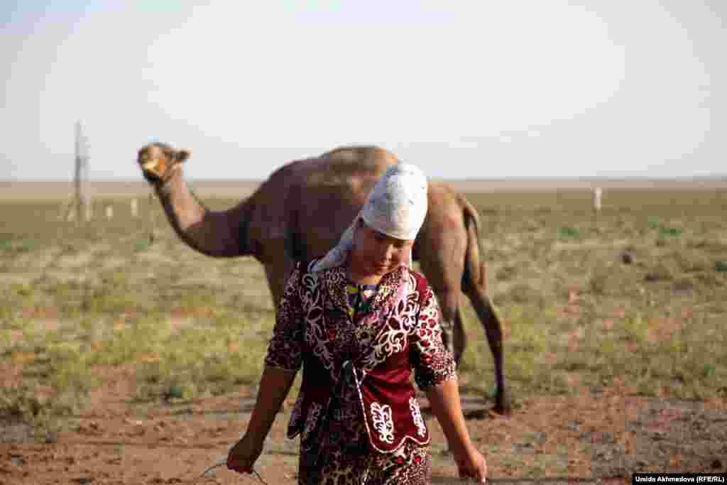 Доярка Айдана несет полные ведра верблюжьего молока.
