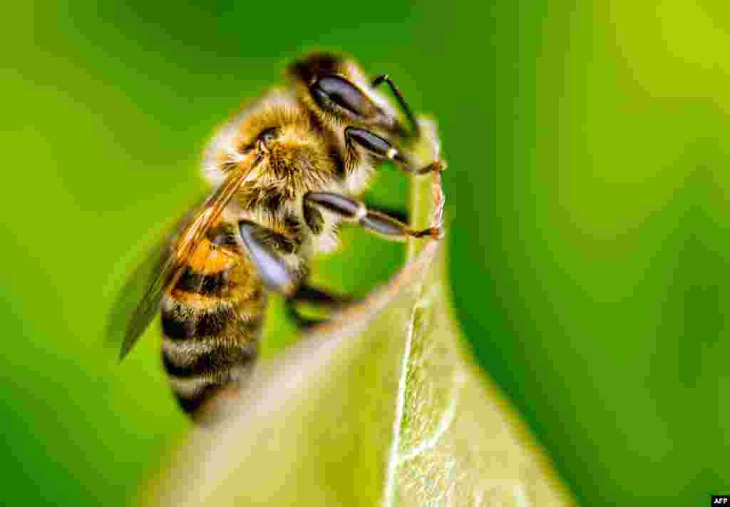 Эта пчелка не догадывается, что стала негласным символом танца тверк в России. В середине сентября Брянский районный суд на 10 сутокарестовал исполнительницу скандально нашумевшего танца