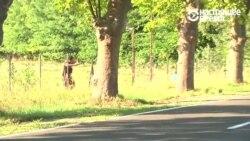 Мигранты пытаются сбежать из Венгрии
