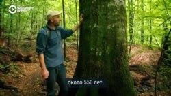 Закарпатские буковые леса – мировое достояние из Списка ЮНЕСКО