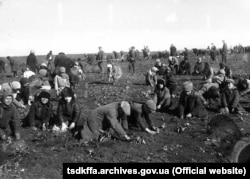 Крестьяне села Удачное Донецкой области собирают промерзший картофель, 1933 год
