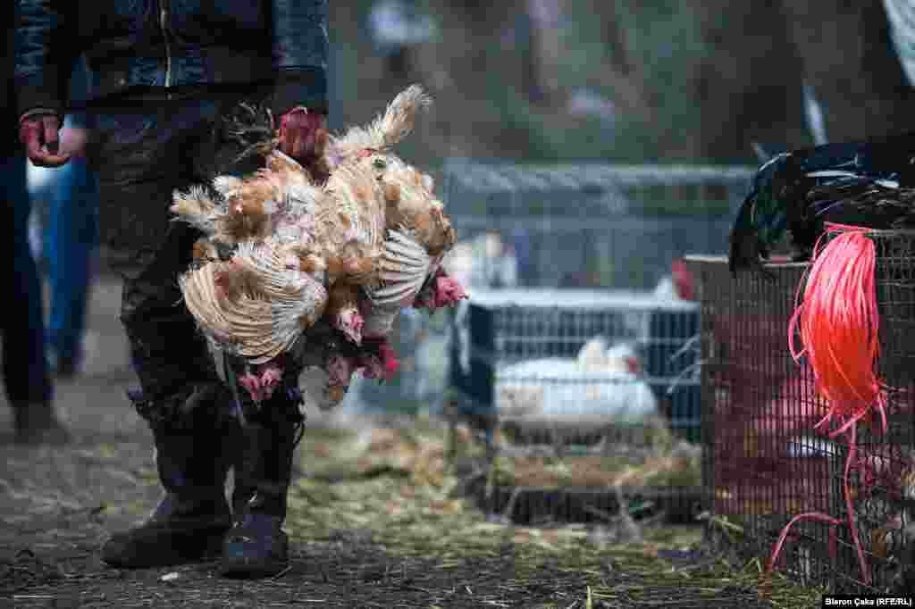 На курином рынке в городе Вучитрн было особенно оживленно. Фото – Блерон Чака