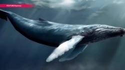 """""""Синий кит"""" или цензура – почему власти Казахстана хотят перенести серверы соцсетей"""
