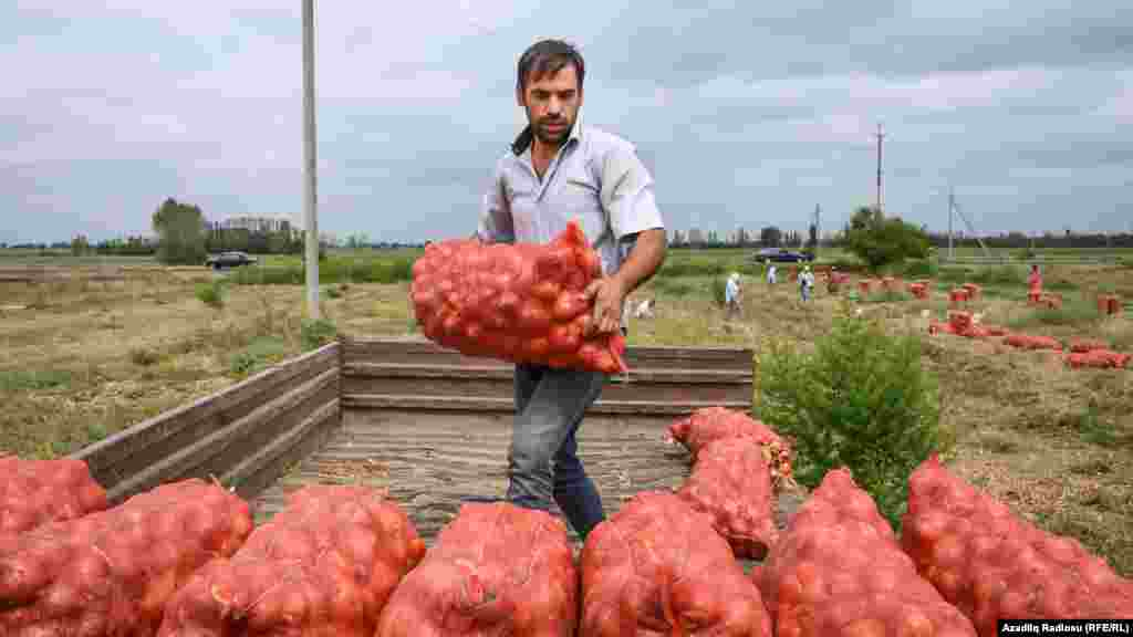 In 2016, a farm worker in a part of the Agdam district still controlled by Azerbaijan harvested onions, a local crop. On November 18, 2020, two days before the handover of the entire district to Azerbaijan, ethnic Armenians in a village near the town of Agdam harvested persimmons as a recollection of the place they are leaving.