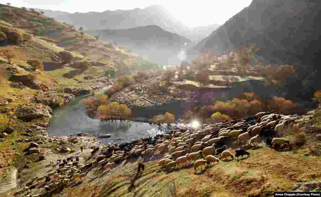 Пастухи деревни Паланган ведут стадо овец на пастбище