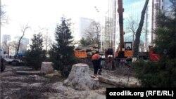 По словам жителей, посаженные вместо спиленных платанов ели не подходят для жаркого климата Ташкента – они не бросают много тени