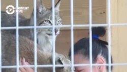 Kyrgyz Veterinarian Turns Home Into Sanctuary For Injured Wildlife
