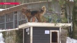Почему собакам в латышских приютах никогда не дают имена