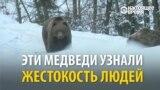 В Закарпатье возвращают к жизни медведей, пострадавших от жестокого обращения человека