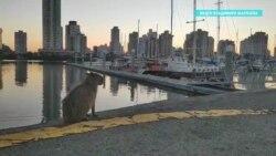 Морские путешественники из России застряли в Бразилии из-за пандемии