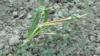 """""""Подрыв продовольственной безопасности"""". В Кыргызстане из-за нехватки воды может погибнуть урожай"""