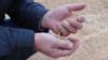 Новосибирские фермеры показали, как в регионе гниет непроданное зерно