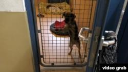 Бездомная собака по кличке Витаминка из белорусского Кобрина в австрийском приюте Wiener Tierschutzverein