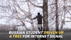 Russian Student Driven Up A Tree For Internet Signal