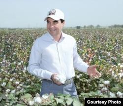 Президент Туркменистана на хлопковом поле