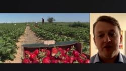 Что не так с принятым законом о продаже земли в Украине, объясняет экономист