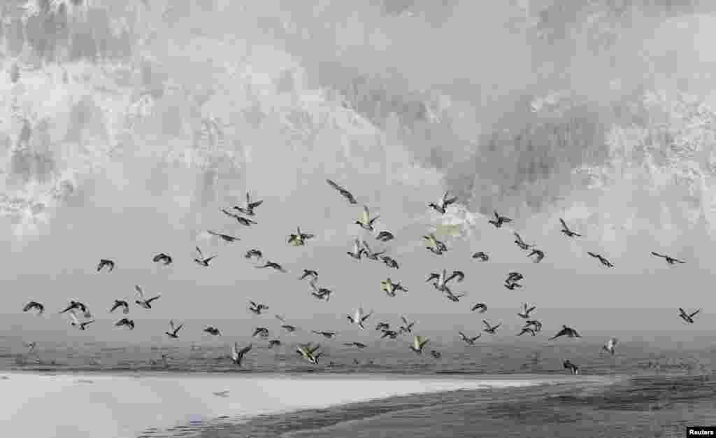 Утки летят над рекой Енисей при температуре воздуха -30 по цельсию. Сибирская Тайга, Красноярский Край.(Reuters/Ilya Naymushin)
