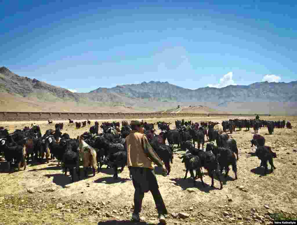 Для представителей племени выделили 10 мест (из 249) в афганском парламенте. В правительстве также создали специальный департамент по интеграции кучи