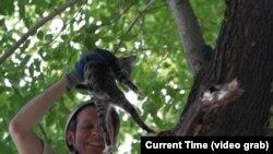 Animal Samaritan: Volunteer Goes Out On A Limb To Save Lives