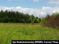 Кони неподалеку от дачи Валерия Герасимова