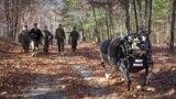 Детали: Boston Dynamics открывает продажи робота-пса