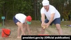 Белорусский президент Александр Лукашенко с сыном Николаем собирают картошку, 16 августа 2015