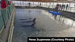 """Во время проверки """"китовой тюрьмы"""""""