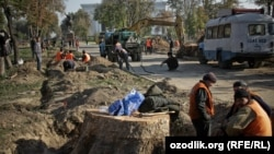 Рабочие спиливают чинары в сквере имени Амира Темура в Ташкенте, ноябрь, 2009 год