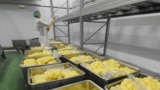 RUSSIA -- Vacuum-packed cooked peeled potatoes ready for shipment at Concord Culinary Line factory