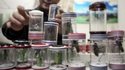 China -- A shop vendor arranges his display of crickets in little containers for sale, 07 December 2006 in Xian