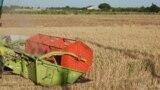 Азия: в Узбекистане власти насильно отбирают урожай у фермеров